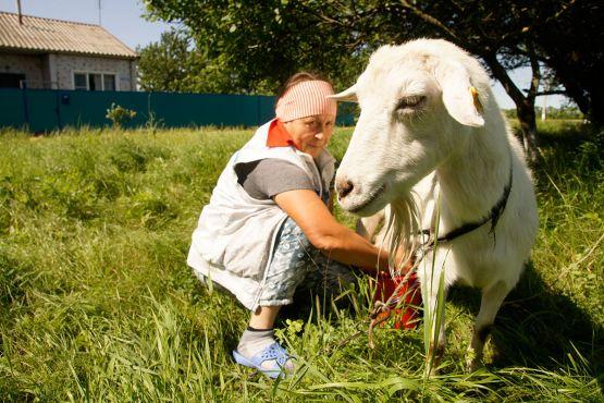 А чтобы на столе всегда было молоко, сельчане держат коз