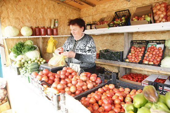 На въезде в станицу Калниболотскую расположилась  торговая точка для реализации овощей местных производителей. На одном из прилавков представлена продукция Павла Пахолкова, с которой овощевод участвовал в «Кубанской ярмарке-2018»