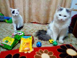Эти котики победили! За них отдано 116 голосов во втором туре голосования.  Кстати, победу они одержали и в первом голосовании. Котики, поздравляем!