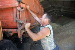Водитель Виталий Тюльпинов отгружает зерно на склад