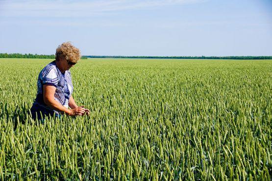 Главный агроном ОАО «Кубань» Ирина Истомина каждый день объезжает озимые поля и мониторит состояние посевов