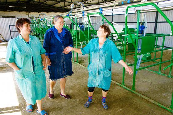 Много лет трудятся в молочном животноводстве Анна Грекова, Любовь Иванова и Светлана Давыдова (слева направо). Для улучшения условий труда доярок на МТФ построили площадку для летней дойки