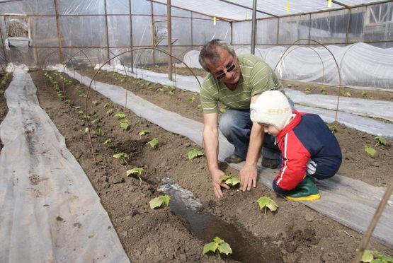 Хачик Артаваздович Асатрян показывает и рассказывает своему внуку Тимуру,  как растут огурцы