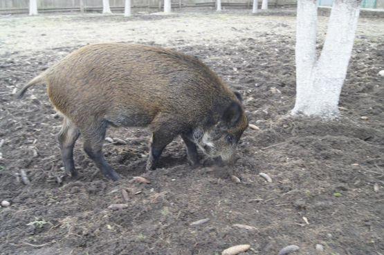 Один из ярких представителей фауны поселка