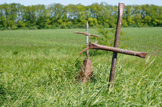 Из высокой травы выглядывают старые, покосившиеся кресты