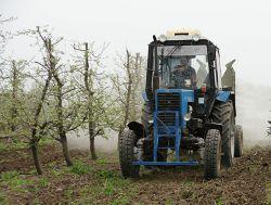 В саду СПК «Колос» ведется обработка деревьев от болезней  и вредителей