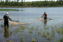 Работы в рыбоводческом хозяйстве, как и в земледельческом, подчиняются сезону и строгому распорядку