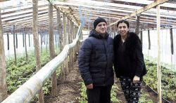 Тарел и Айгюль Атаевы с увлечением занимаются овощеводством закрытого грунта. На сегодняшний день в их теплицах подрастает рассада томатов