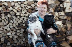Ирина Ивановна Тузова из поселка Вперед очень любит собак, особенно своих питомцев – мопсов с веселым, дружелюбным характером