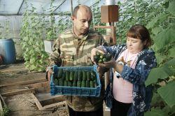Алексей Громов с женой Ольгой собрал новый урожай тепличных огурцов